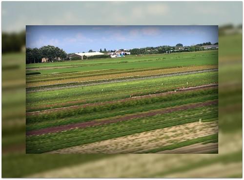 Nederland - Pinceladas