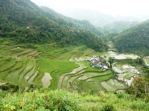 Luzon-Bangaan (99)