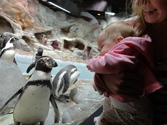 princess marla pie meets penquins