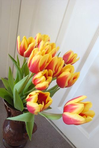Tulipes Mars015 width=