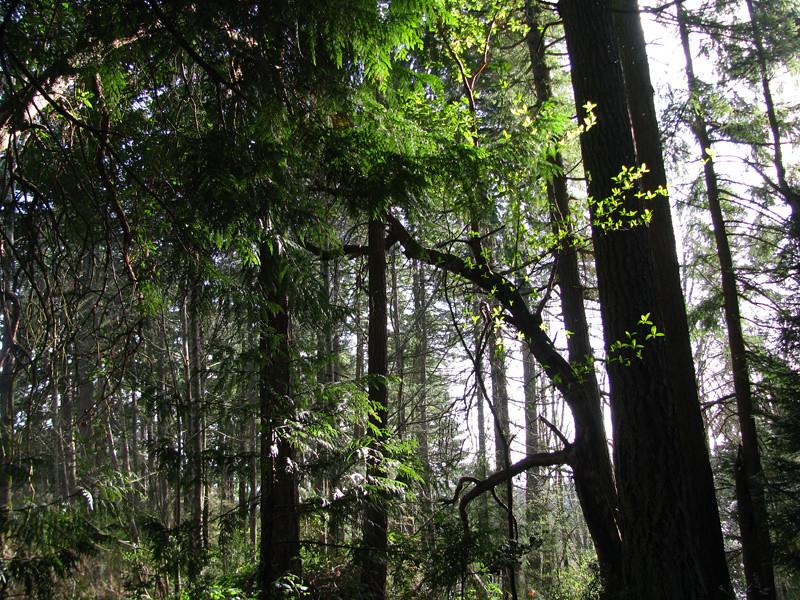 Glimpsing Through the Trees