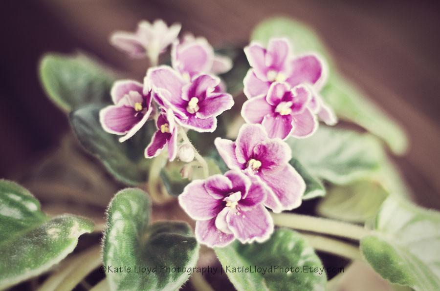 3-22-12-violets-wm