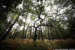 Bretagna - foresta di Broceliande 2