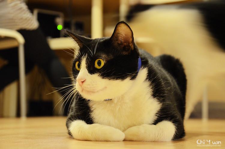 [Cat]台北。貓藝家,小布透視的雙眼