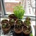 indoor mini herb garden