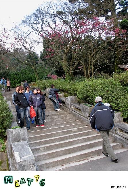 【遊記】陽明山國家公園|櫻花乍現在粉紅意境的花花世界03