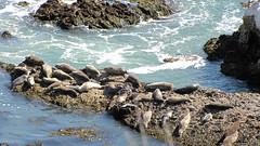 Shell Beach Sea Lions