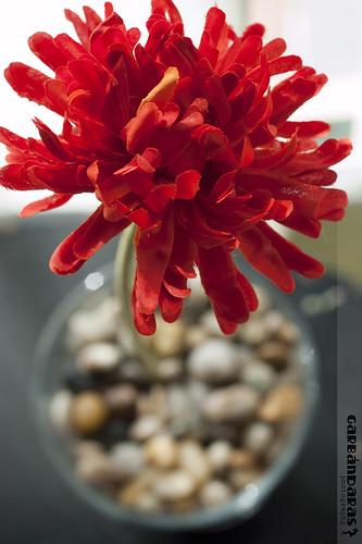 ...flor y pondio... by Garbándaras