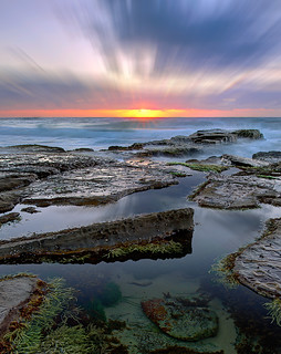Rock-Pool-Beauty