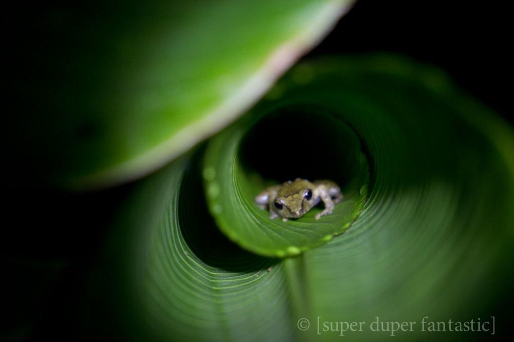 Bajo del Tigre Night Walk - Monteverde