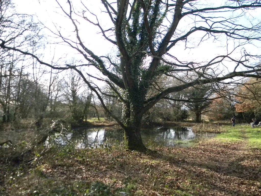 Tree and pond Whyteleafe to Woldingham