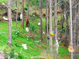Madeira Camacha Wandern