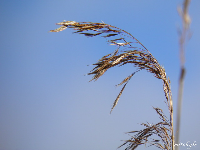 Wintergrass 1