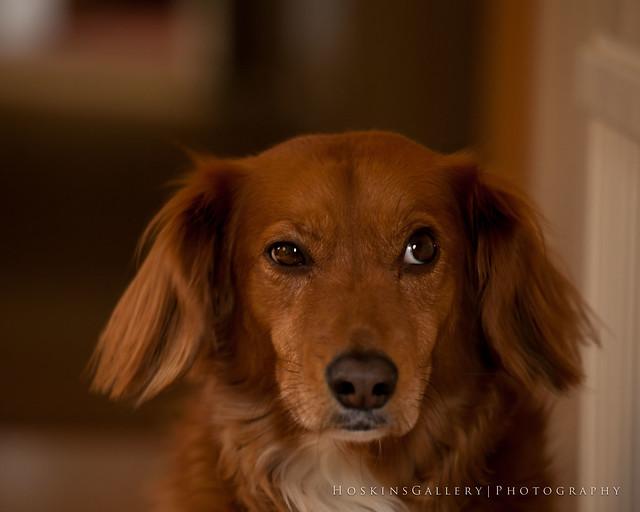 Suspicious Dog....