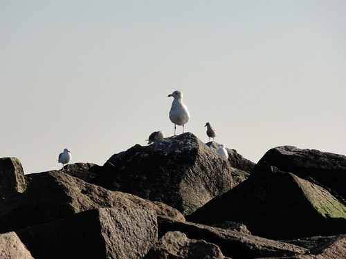 Seagulls on the Rocks at Coney Island