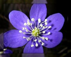 blommor och småkryp