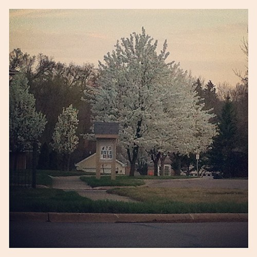 March trees in bloom. View from the bus stop. by The Shutterbug Eye™