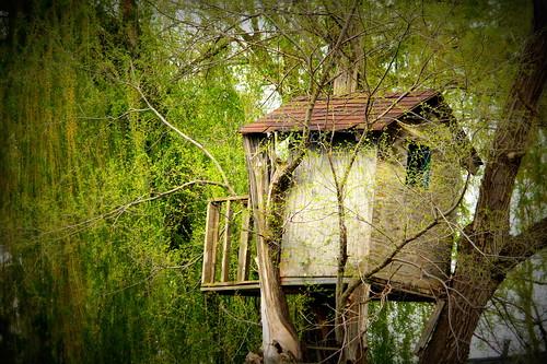 Treehouse - Lomo-ish
