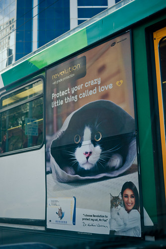 Cute Revolution cat protection tram ad