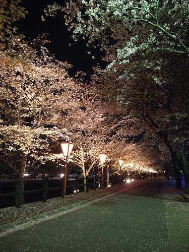 夜桜2012@大中公園(大和高田市)-06