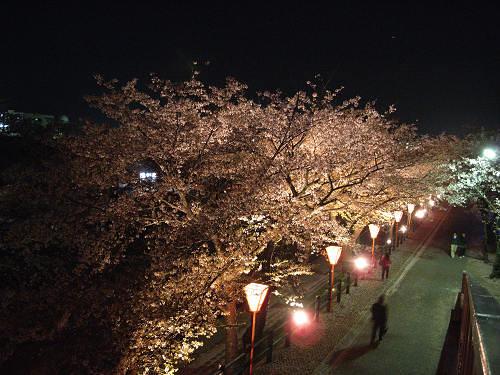夜桜2012@大中公園(大和高田市)-04