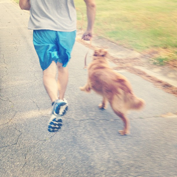 Montag's first run with us. #goldenretriever #running #toneitup
