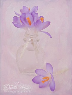 Crocus in Vase