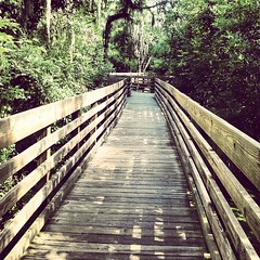 Awesome boardwalk at Lettuce Lake Park