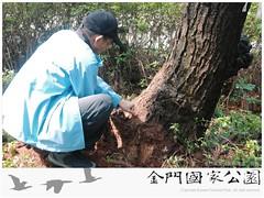中山林松樹救治(0409)-01