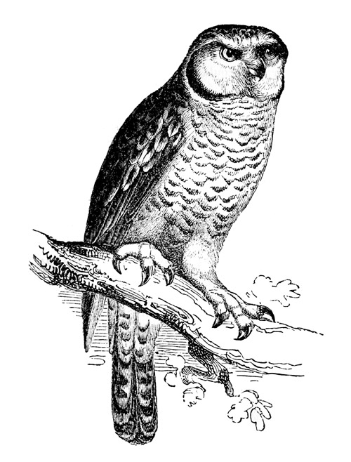 owl-hawk-engraving
