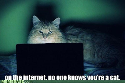 Cat on internet