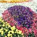 Yanbu Flower Festival