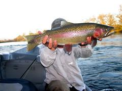 Lower Sacramento River - Big Buck