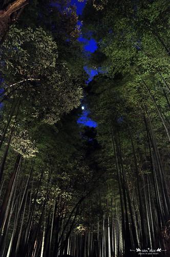 Arashiyama 嵐山 - 15