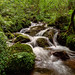 Mountain Stream in the  Black Forest - Germany