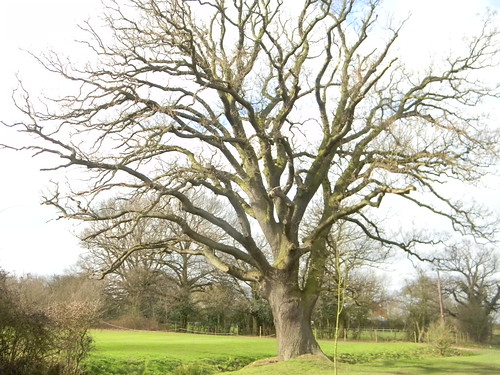 """""""""""...to the right of a large oak tree"""