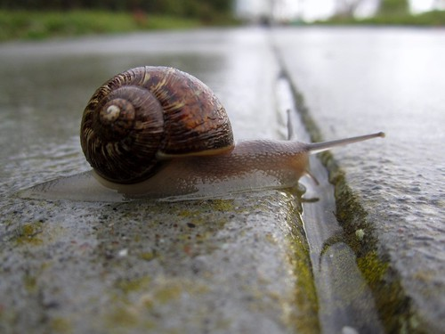 A snail trying not to get stepped on in Sunnyvale by nicolecwong