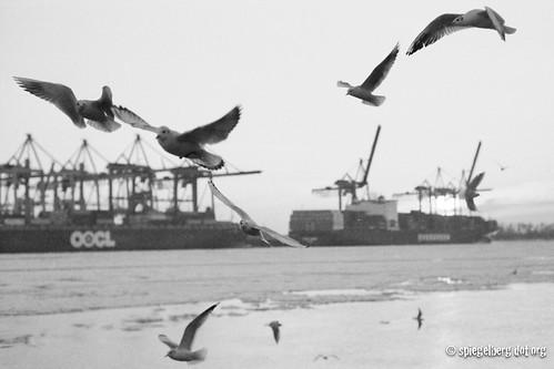 Vogelfluglinie