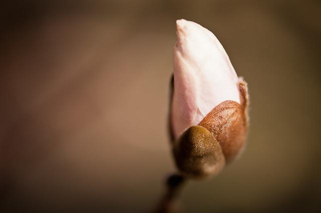 021 flower