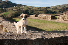 A Canine Tour Guide