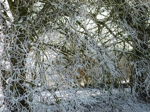 Hoar frost 4