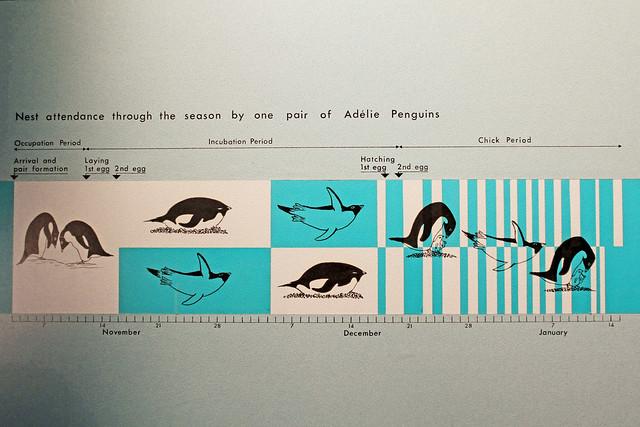Penguin chart