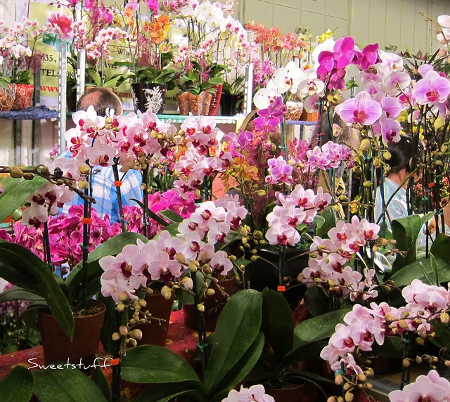 Orchids at the S.F. Flower & Garden Show