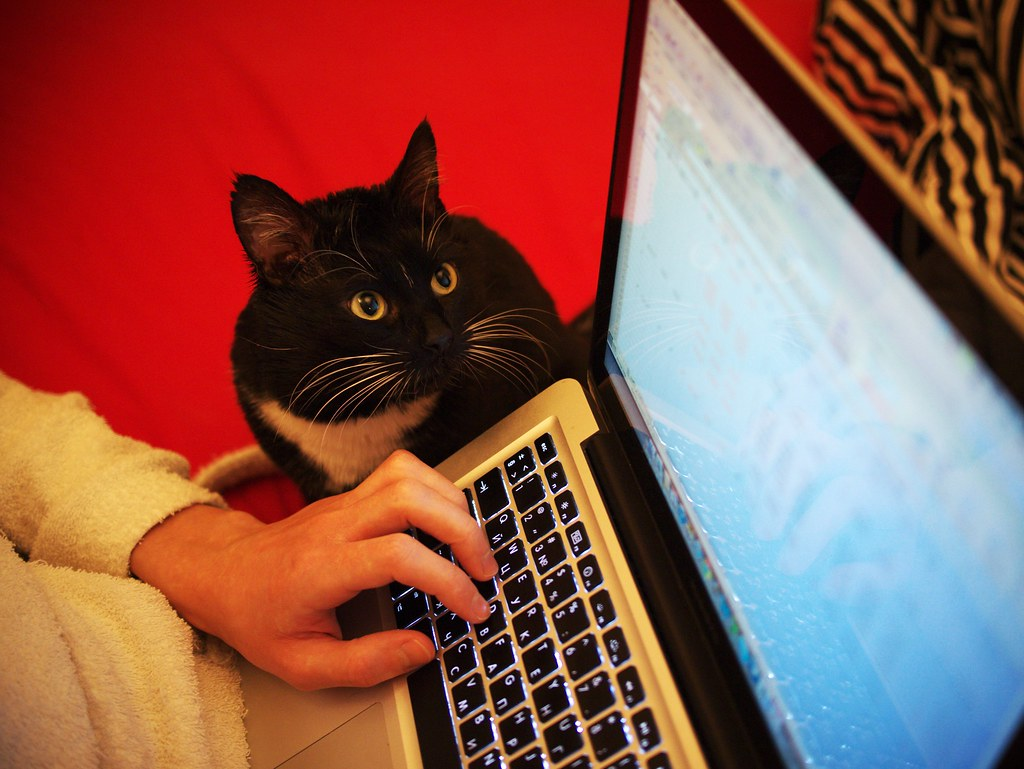 Financial consult-cat