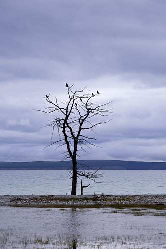 Birds on a bare tree