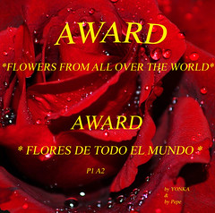 a red rose......