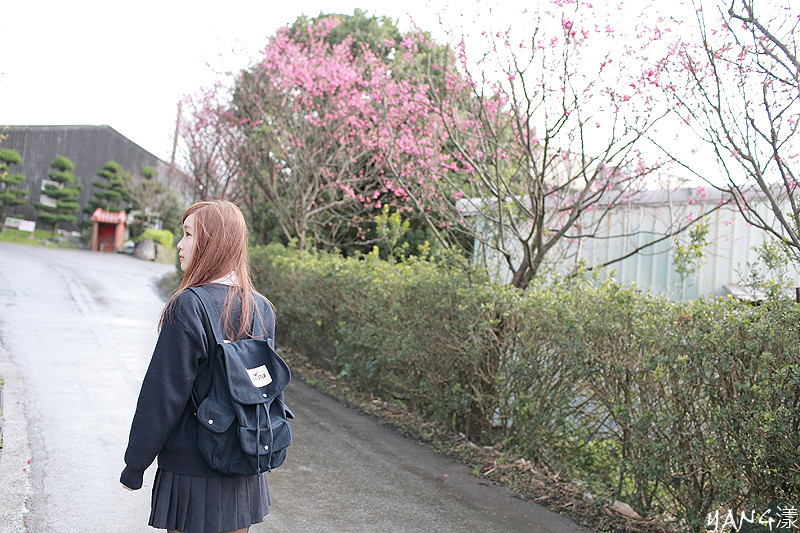 Abbey◆2012桜の時