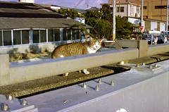 Cats (and a Dog) on Okubo Beach about 15 years ago