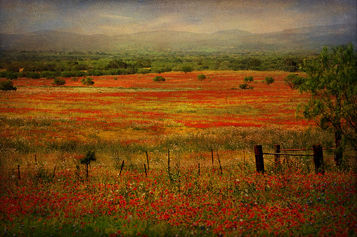 Wildflower fields