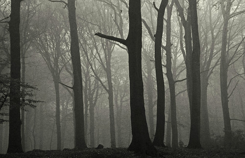 "wood autumn blackandwhite bw mist holland tree nature netherlands fog canon landscape eos blackwhite woods day nederland denhaag boom bos landschap clingendaal ""flickraward"" flickrhivemindgroup"